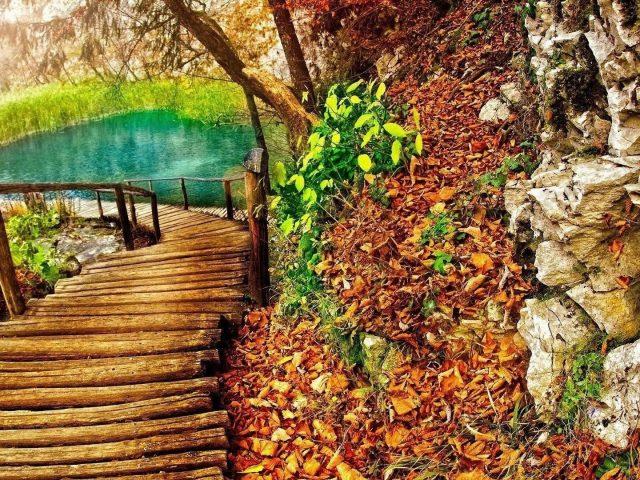 Деревянный причал, ведущий к пруду, окруженному зелеными растениями, пейзаж с сухими листьями
