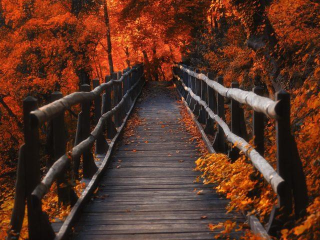 Коричневый деревянный причал между оранжевыми осенними деревьями в вечернее время природа