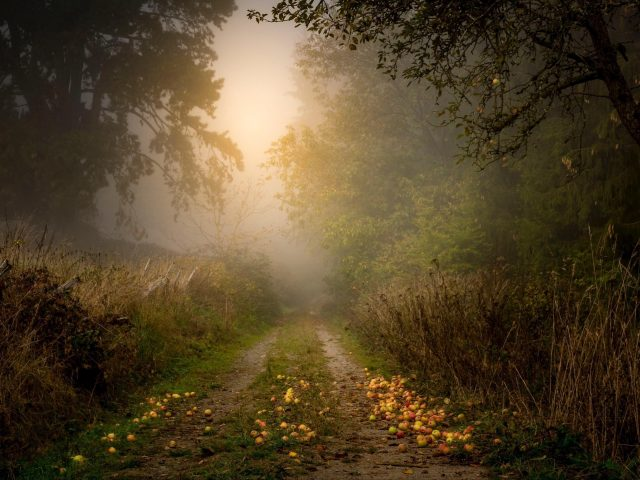 Солнечный свет, проходящий через яблоню с рукотворной дороги природы