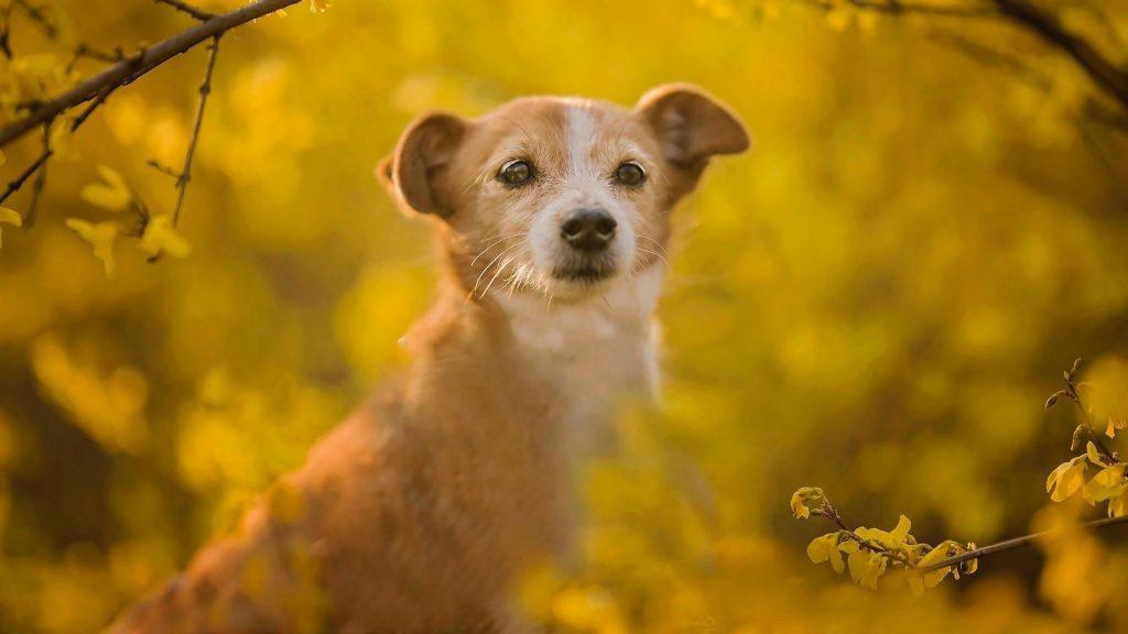 Собака стоит в синих желтых цветах на фоне поля собака обои скачать