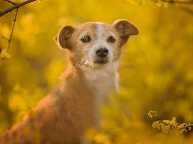 Собака стоит в синих желтых цветах на фоне поля собака