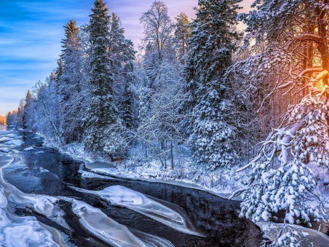 Заснеженные деревья лес и река замерзли во время восхода солнца природа