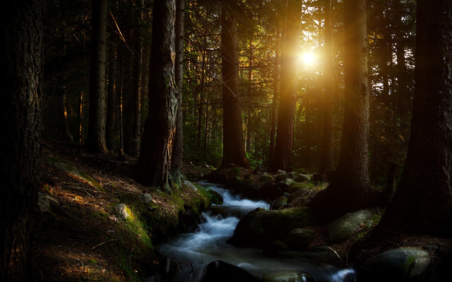 Лесной ручей. обои скачать