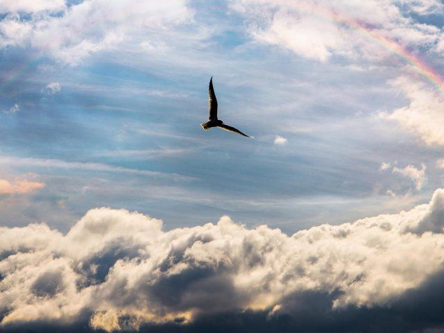Птица летает между облаками под радугой в дневное время