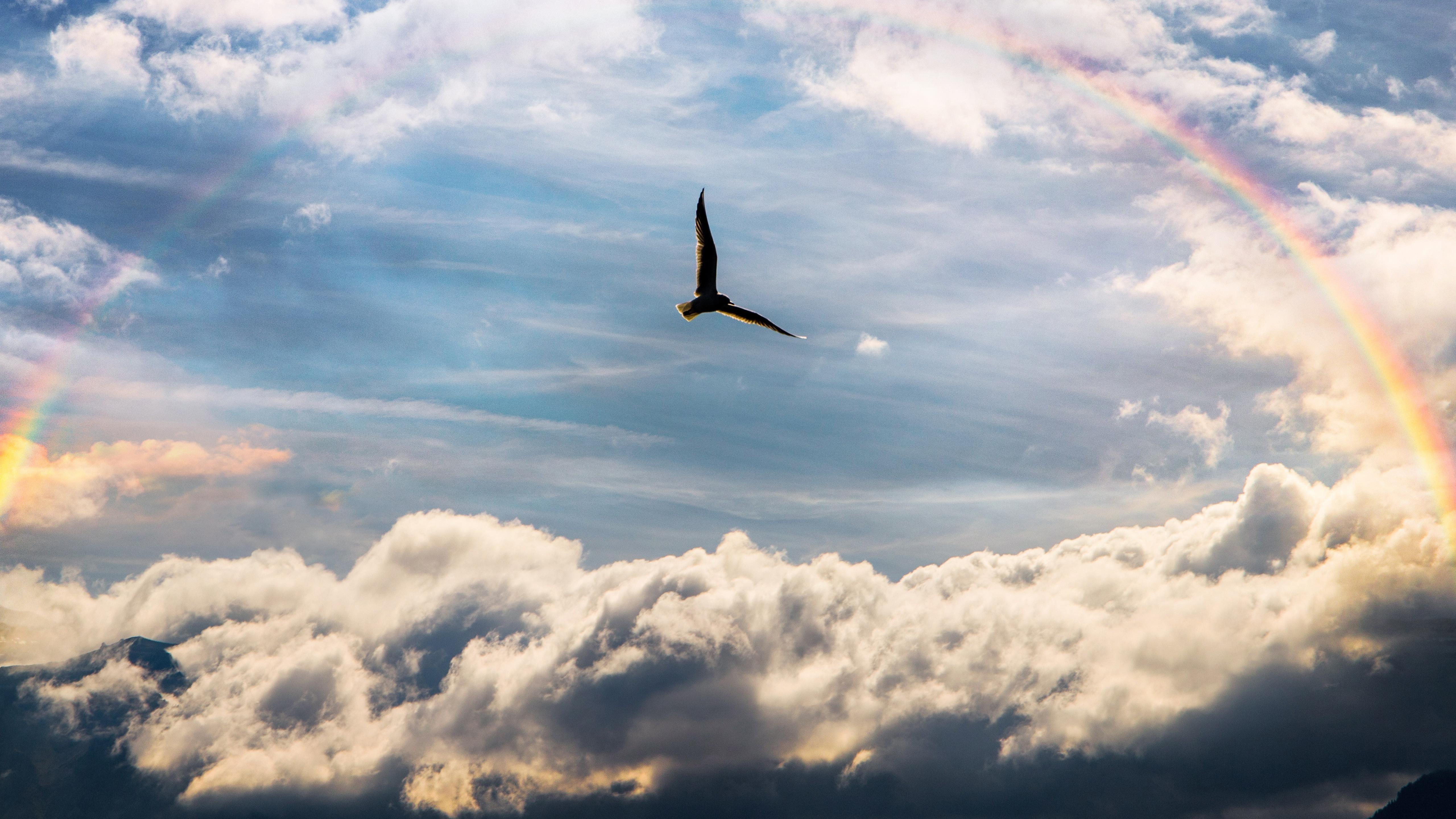 Птица летает между облаками под радугой в дневное время обои скачать