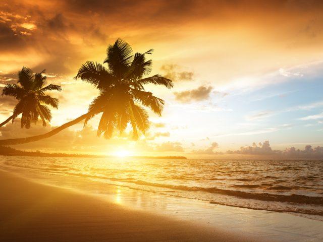 Тропический закат,  плача пальма,  облачное небо,  Карибского бассейна