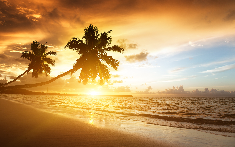 Тропический закат, плача пальма, облачное небо, Карибского бассейна обои скачать