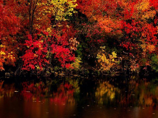 Красочные лесные пейзажи