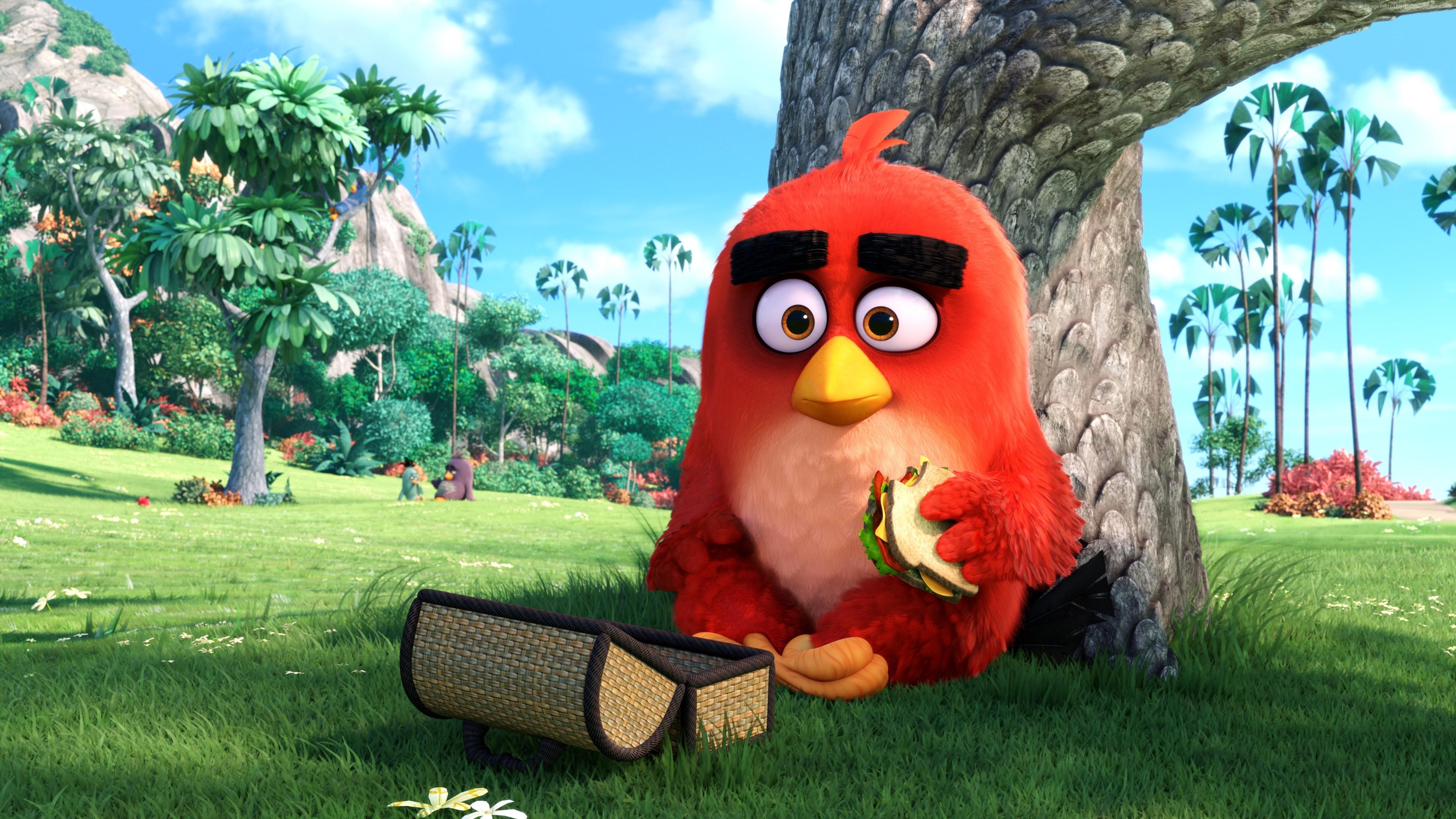 Красный сердиться птиц. обои скачать
