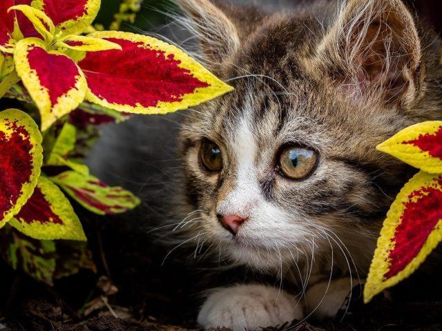 Милый коричневый черный котенок-кошка между желто-красными листьями котенок