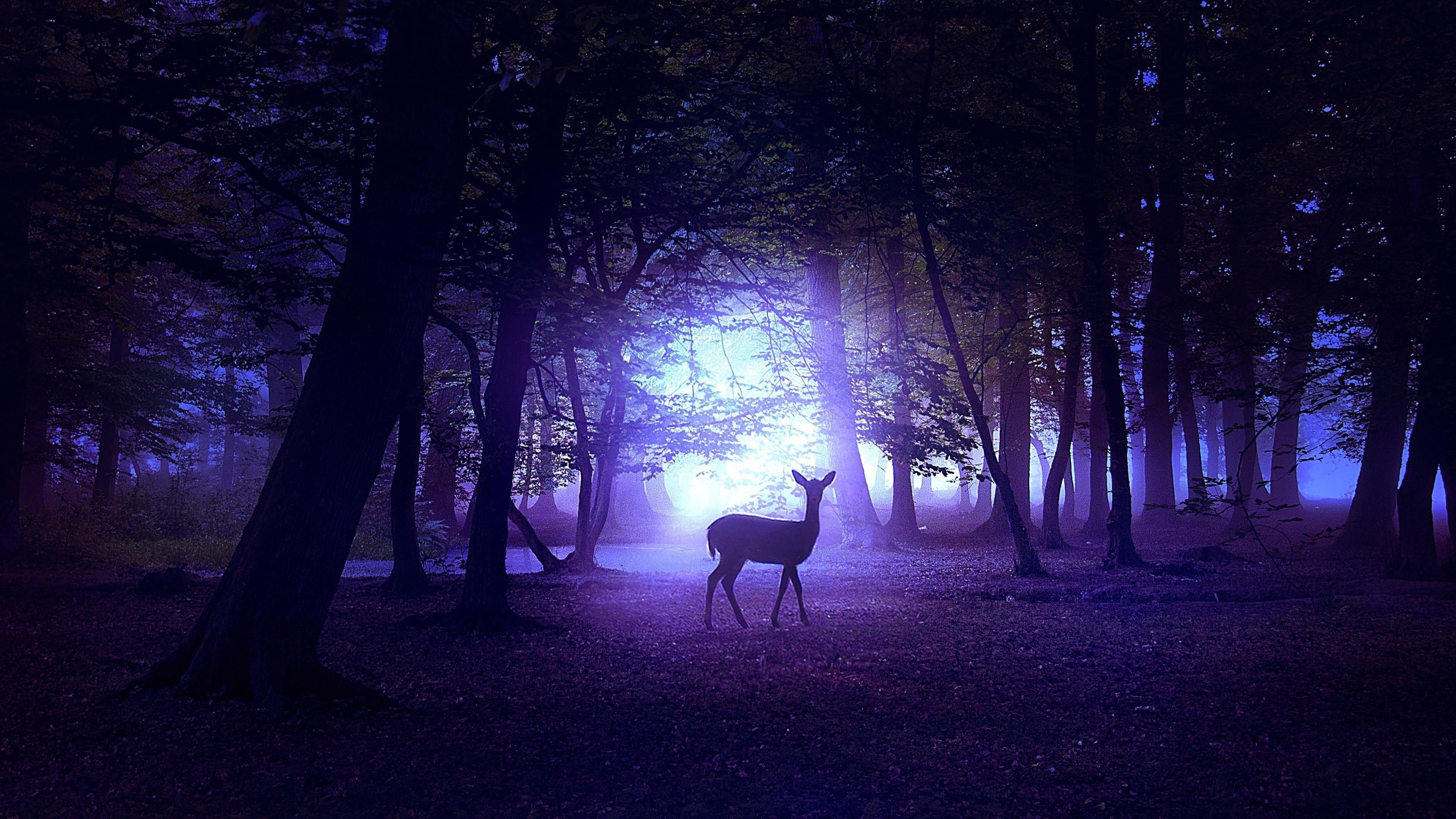 Олень в ночи обои скачать