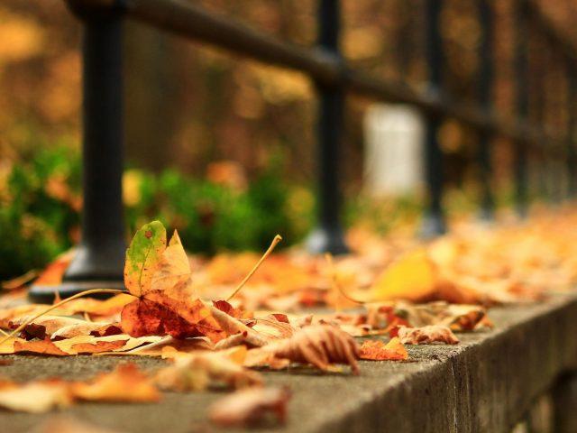 Сухие листья падают вниз на размытом фоне листьев на улице природы
