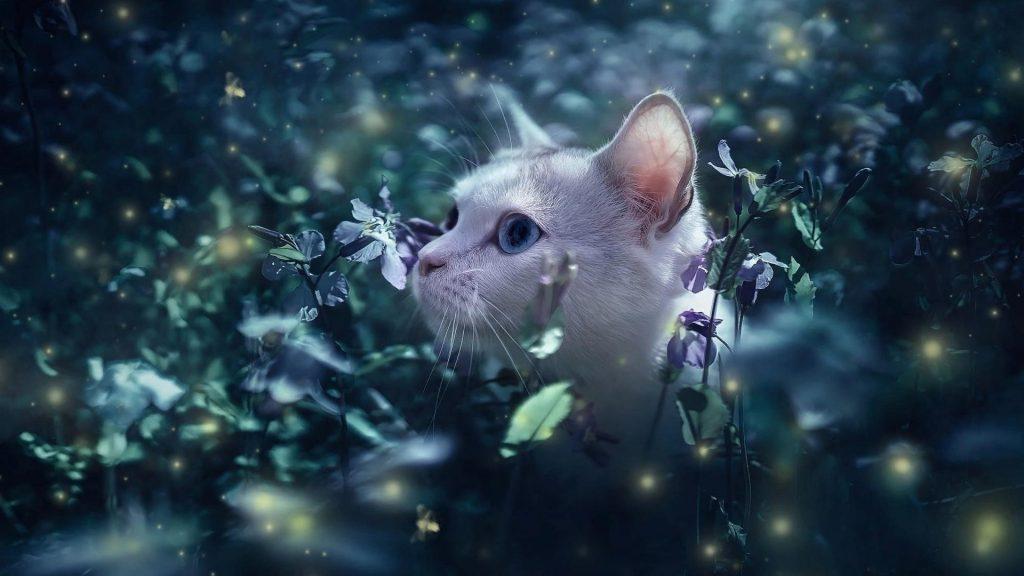 Белый кот стоит посреди цветочных растений полевой кот обои скачать