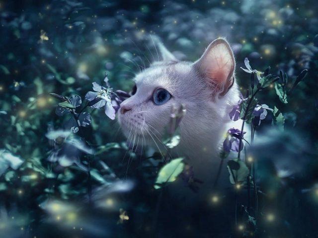 Белый кот стоит посреди цветочных растений полевой кот